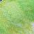 DTD - PG (Picarel Green)